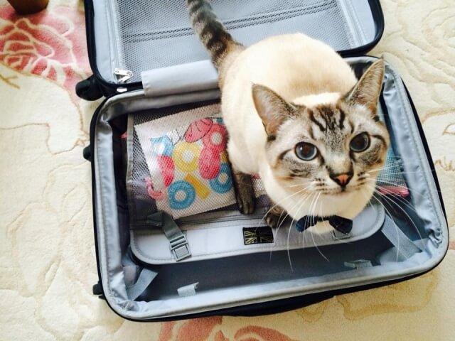 スーツケース 選び方