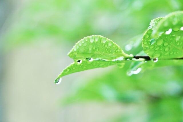 雨の日 偏頭痛