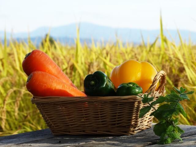 10月 野菜 ガーデニング